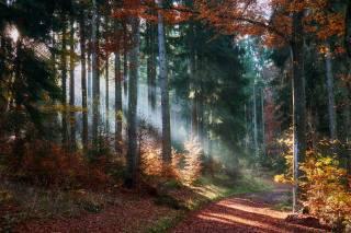 ліс, осінь, стежка, дерева, листя, промені світла, Природ
