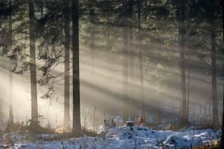 сніг, ліс, промені сонця