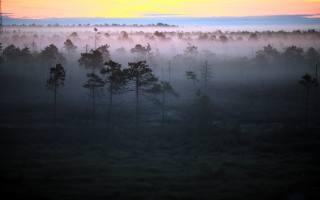 утро, лес, туман