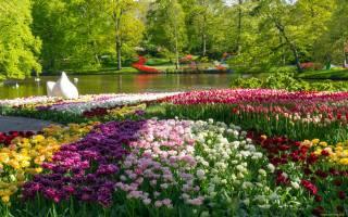 природа, парк, тюльпаны, пруд, весна