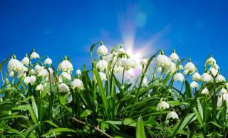 цветы, листья, небо, солнце, весна