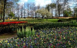 природа, парк, нарциссы, весна, мускари, клумбы, тюльпаны