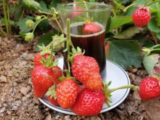 strawberry, coffee, autumn