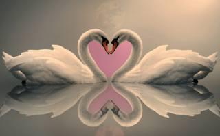 PAIR, swans, loyalty, Love
