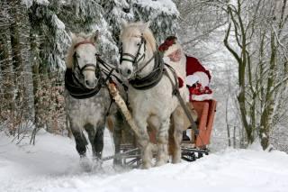horses, New year, Sani, Santa Claus, animals