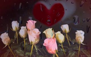 rose, drops, glass, heart