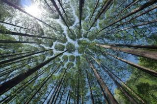 дерева, крони, небо, ракурс