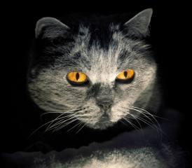 kočka, мордочка, oči, pozadí
