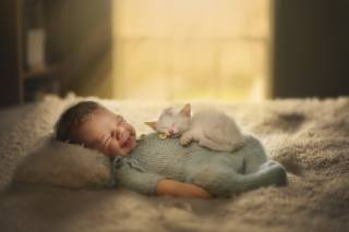 child, baby, baby, kitten, Animal, cub, sleep, bed