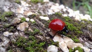 the plan, ladybug, moss