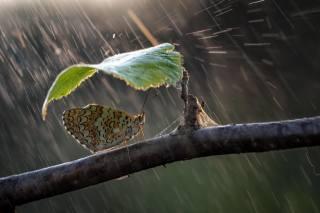 nature, umbrella, the rain, butterfly, Sheet, branch, Roberto Aldrovandi
