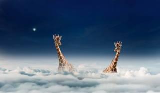 nebe, mraky, žirafy