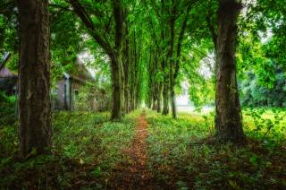 stromy, stezka, dům