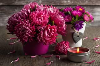 hrnce, květiny, astry, okvětní lístky, Svíčka