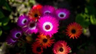 květiny, okvětní lístky, pozadí