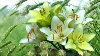 příroda, květiny, lilie, tráva, spikes, чертополох, kapky, voda