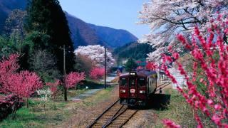 spring, flowering, train