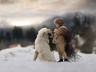 мальчик, собака, друг