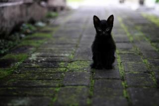 black, kitten, sitting, the sidewalk