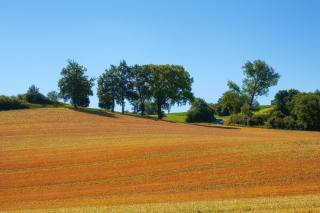 the sky, field, wheat