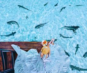 žralok, situace, život