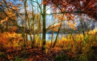 forest, trees, autumn, nature