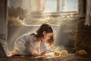 child, girl, Chicks, goslings, hay, window, light