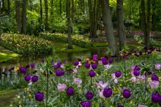 Netherlands, parks, spring, Pond Tulips Keukenhof