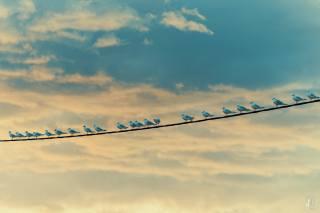 seagulls, birds, wire, the sky