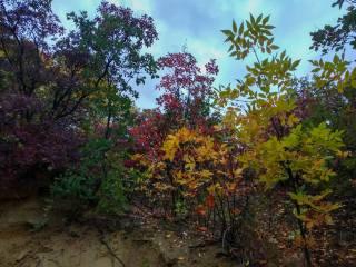 autumn, fall colors, leaves