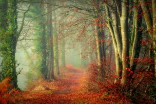 forest, trees, autumn