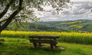 the village, rape, flowers, trees, bench, spring