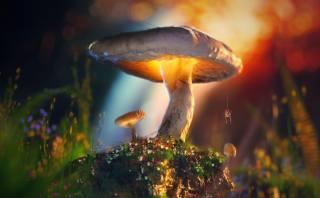 mushroom, spider, macro