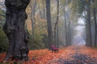 autumn, Park, fog, Alley, leaves, nature