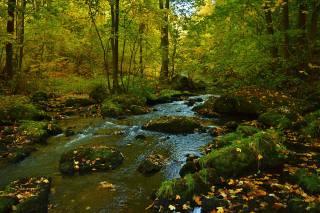 autumn, stones, stream, moss, leaves, nature