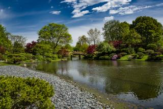 Park, river, the bridge, stones