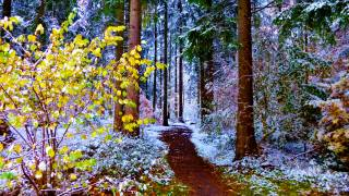 autumn, winter, road, forest