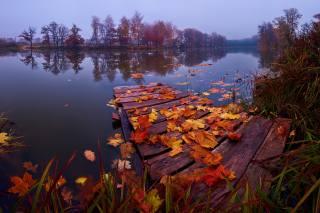 autumn, grass, leaves, landscape, nature, the lake, mostok, The suburbs, Константин Воронов