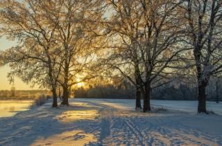 Брянск, природа, краєвид, зима, річка, Десна, берег, дерева, сніг, стежина, сонце