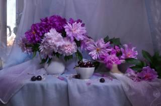 Валентина Колова, ткани, pohár, bobule, višně, džbán, květiny, Pivoňky, okno, tyl
