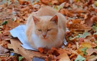 жовті, листя, осінь