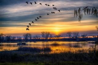 Грей Лодж, озеро, осінь, силуети, зграя птахів, небо, захід