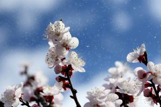 nature, spring, branches, cherry, flowering, the sky, bokeh