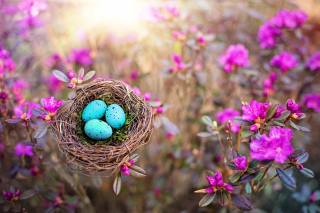 nature, spring, The BUSHES, flowers, багульник, the nest, EGGS
