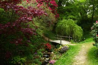 Англія, сад, місток, Ramster Gardens Surrey, струмок, КУЩІ, гілки, природа