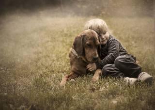 tráva, pes, děti, dítě, chlapec, přátelé