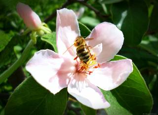May, bee, flower