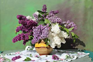table, wipes, vase, branches, lilac