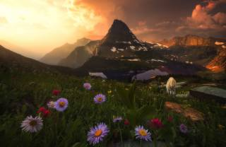 nature, landscape, the sky, clouds, sunset, flowers, mountains, the lake, goat, the slope, pasture, meadow, Коза