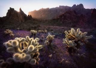 příroda, krajina, hory, skály, kaktusy, slunce, paprsky